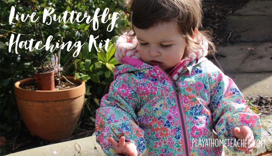 Live-Butterfly-Hatching-Kits