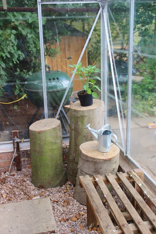 tree-stumps-in-greenhouse