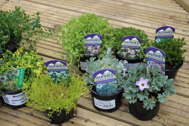 alpines-and-thyme.jpg